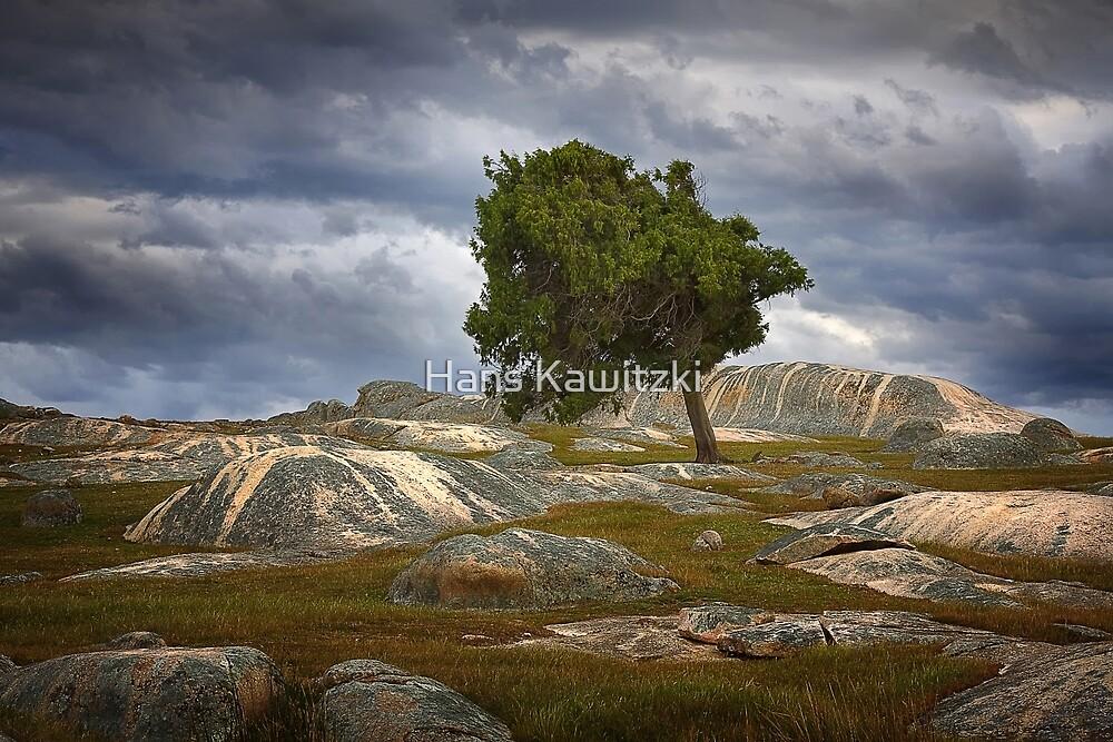 0823 Solitary Tree  by Hans Kawitzki