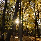Sun Spotting Autumn - a Peaceful Forest in the Fall by Georgia Mizuleva
