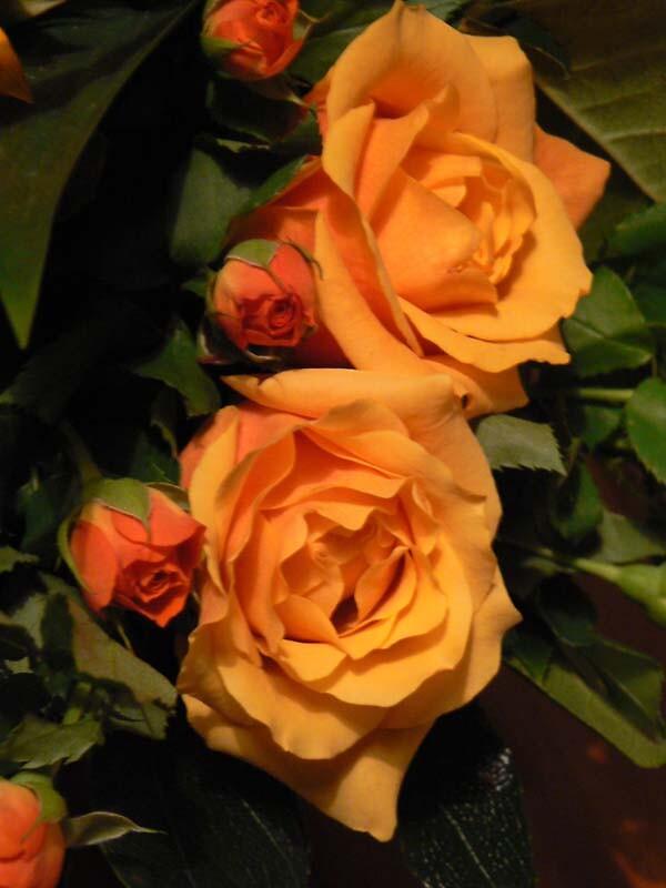 Roses by MayWebb