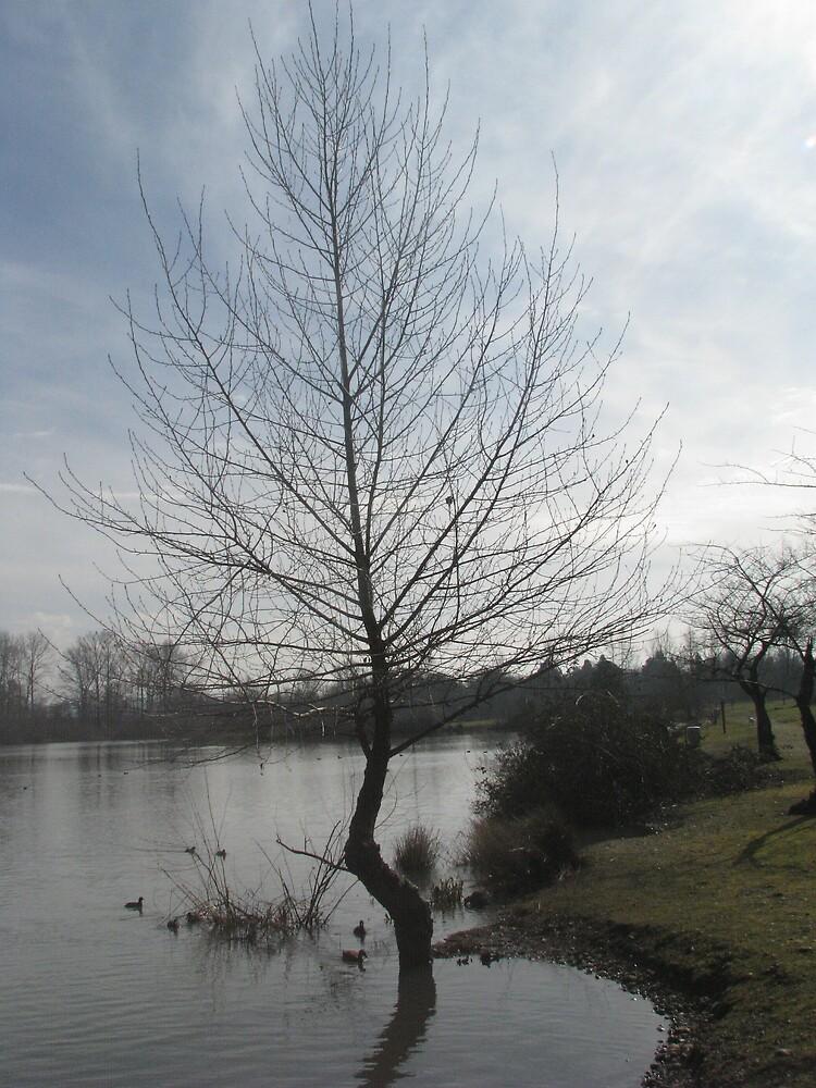 Lone Tree by Corina
