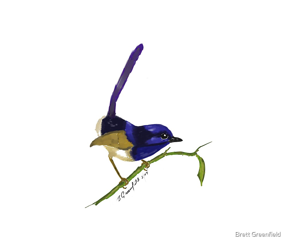 Superb Fairy Wren by Brett Greenfield