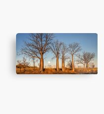 Kimberley Boabs at Sunset Metal Print