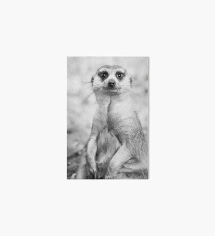 Meerkat portrait Art Board