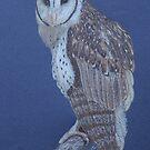 Australian Masked Owl, colour pencil art by Marta Lett