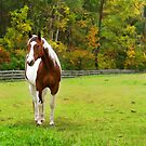 Charming Pinto Horse by Georgia Mizuleva