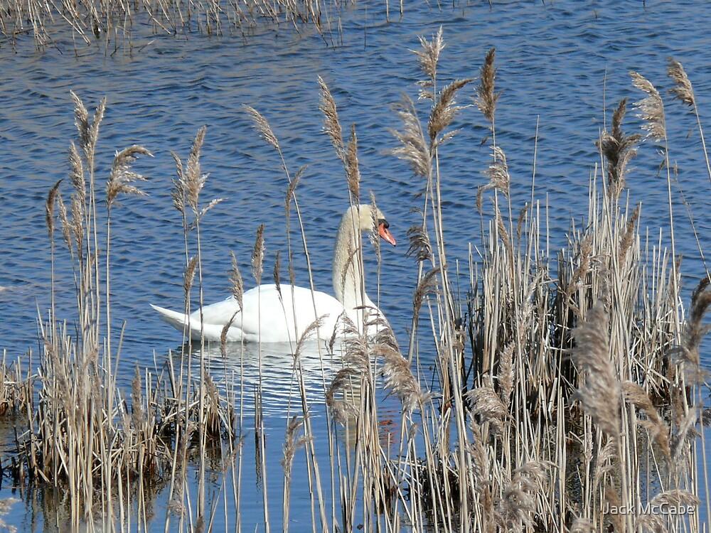 Rhode Island Swan by Jack McCabe