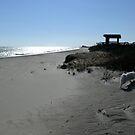 Winter Run at Matunuck Beach by Jack McCabe