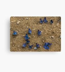The Butterfly Convention Canvas Print