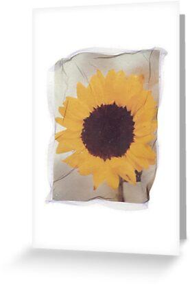 sunflower by fotoaureo