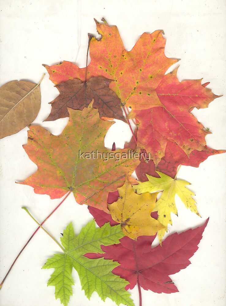 Autumn leaves by kathysgallery
