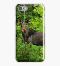 Bull Moose-Yearling. iPhone Case/Skin