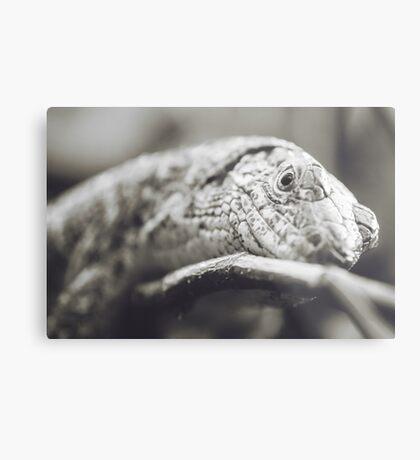 Southeastern Girdled Lizard Metal Print