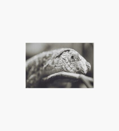 Southeastern Girdled Lizard Art Board