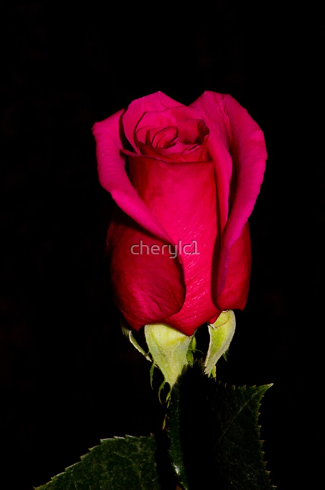 The Rose by cherylc1