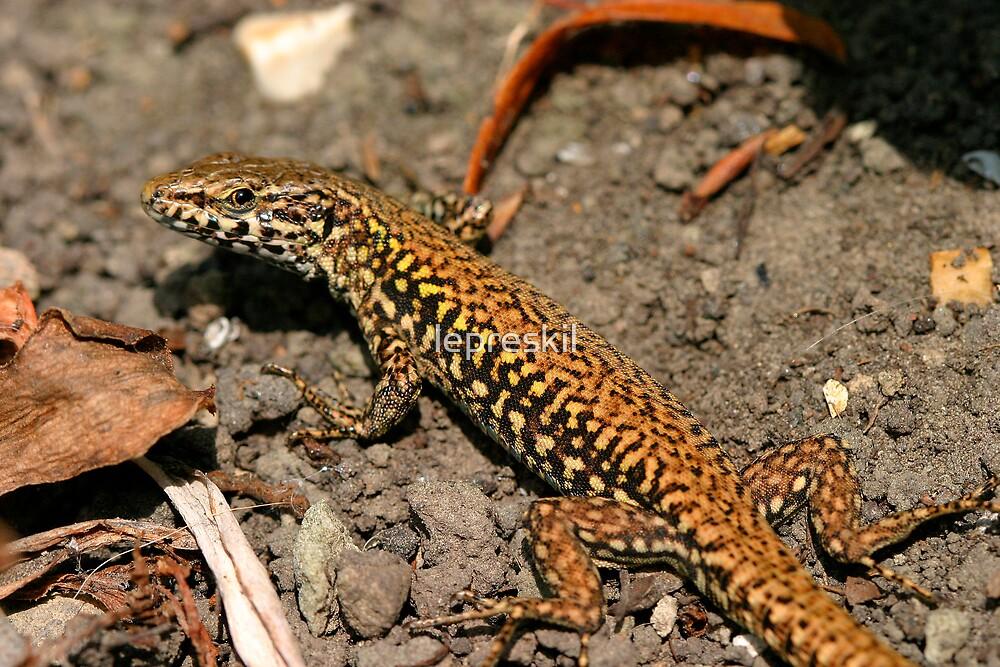 Wall lizard by lepreskil