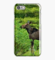 Bull Moose- Yearling twins. iPhone Case/Skin