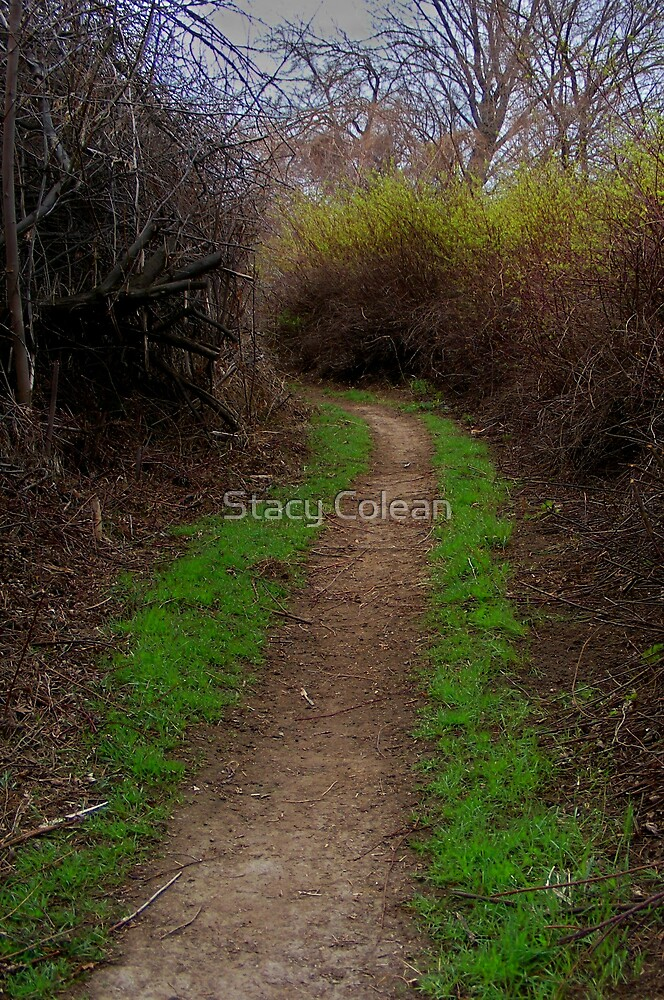 Trail by Stacy Colean