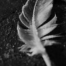 feather by JennySmith