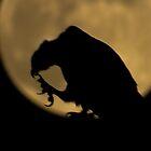On the moon by Zina Stromberg