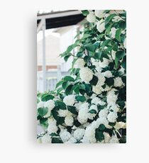 Little Porch Hydrangeas Canvas Print