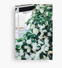 Little Porch Hydrangeas Canvas Print