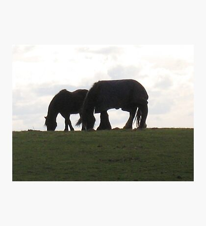 Grazing together Photographic Print