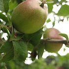Juicy Fruit by KMorral