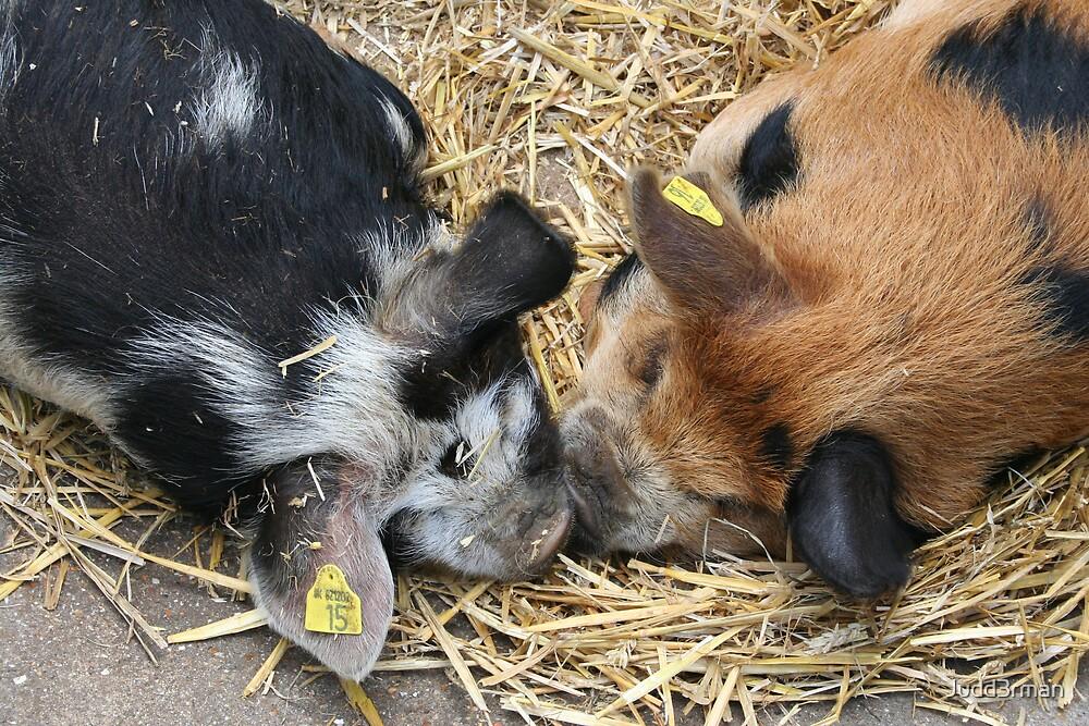 Piggin happy by Judd3rman