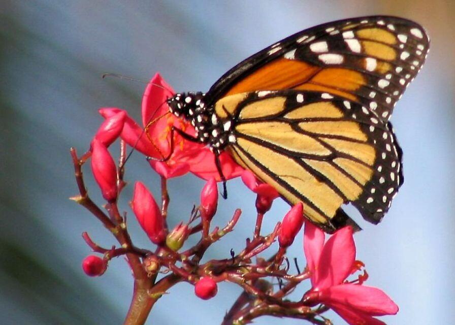 Butterfly by Michael Morris