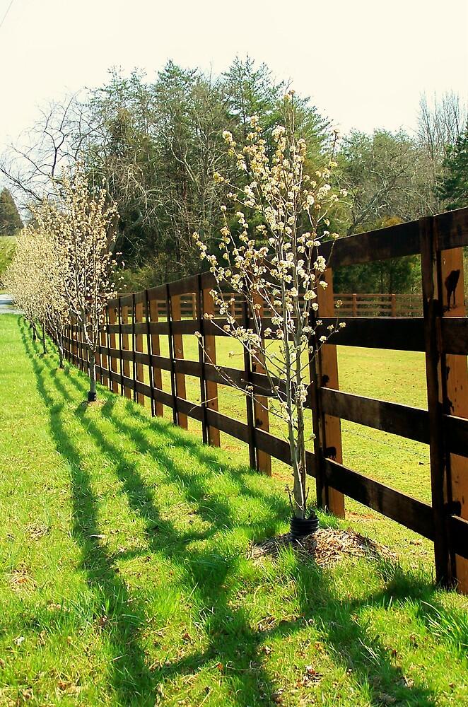 Sun Shining Along Fence by Kristie King
