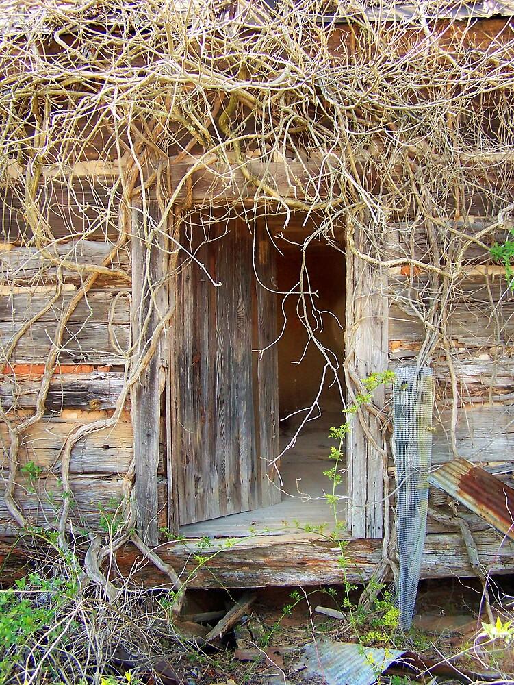Vines Around Old Barn Door by Kristie King