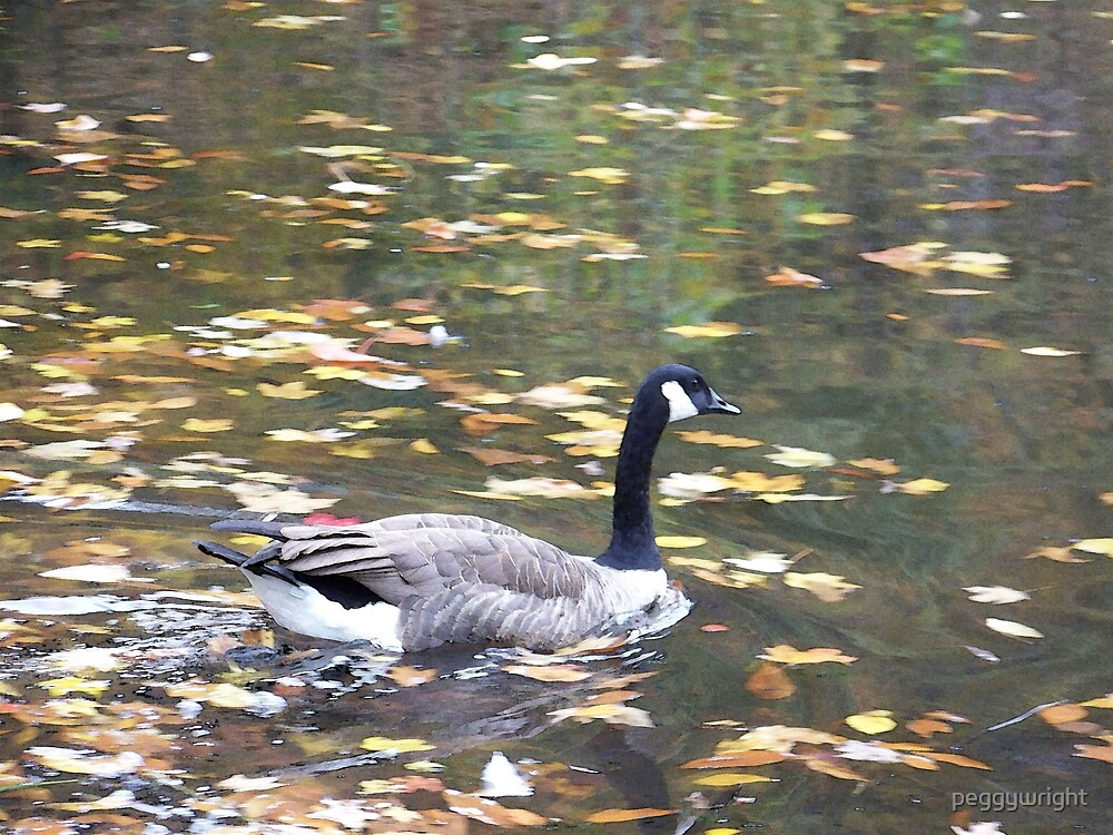 goose at bradys run by peggywright