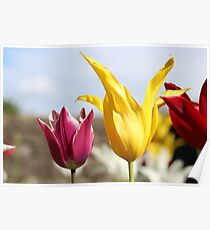 Beamish Tulips Poster