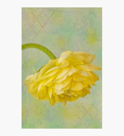 Yellow Ranunculus Macro Photographic Print
