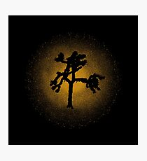 Joshua Tree Gold 30th Photographic Print