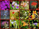 Sapientia floralis  by Vasile Stan