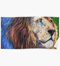 Coloured pencil African lion Poster