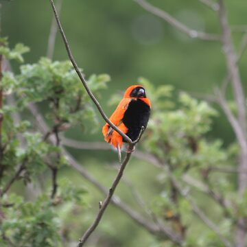 Red Bishop  by spotlightkid
