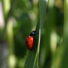 Lady Bug by Cathy L. Gregg