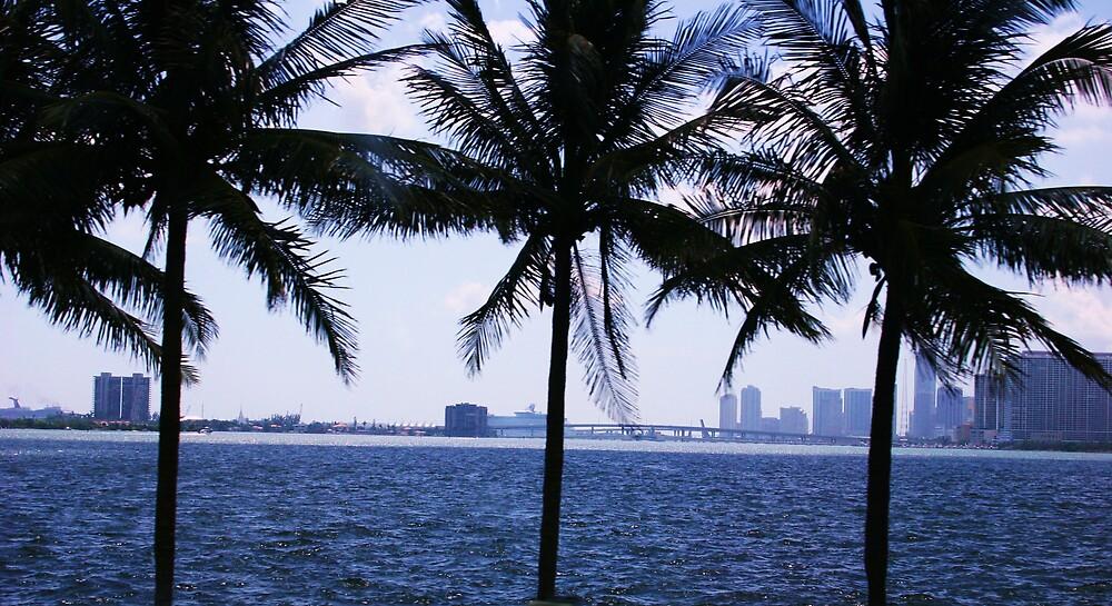 Miami Palms by abryant