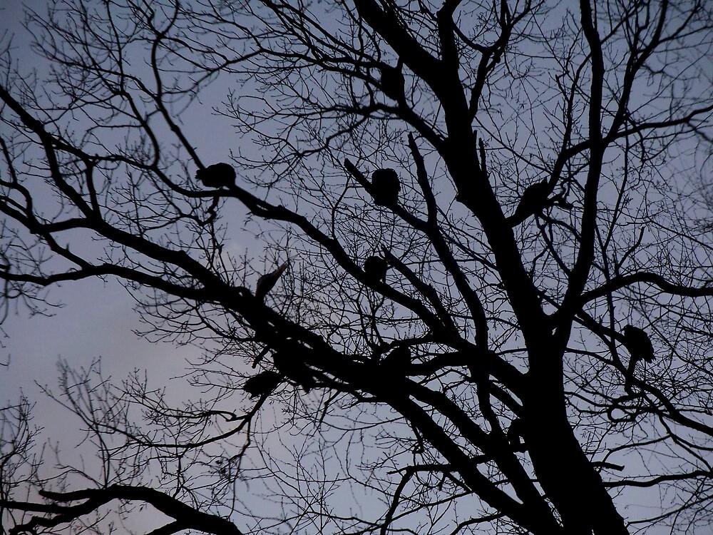 Turkey vulture tree by Judi Taylor