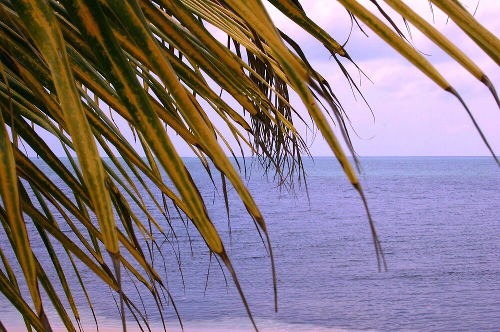 Palm and sea by abryant
