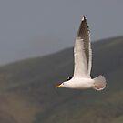 Seagull in Flight by Buckwhite
