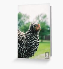 The Mad Chicken Greeting Card