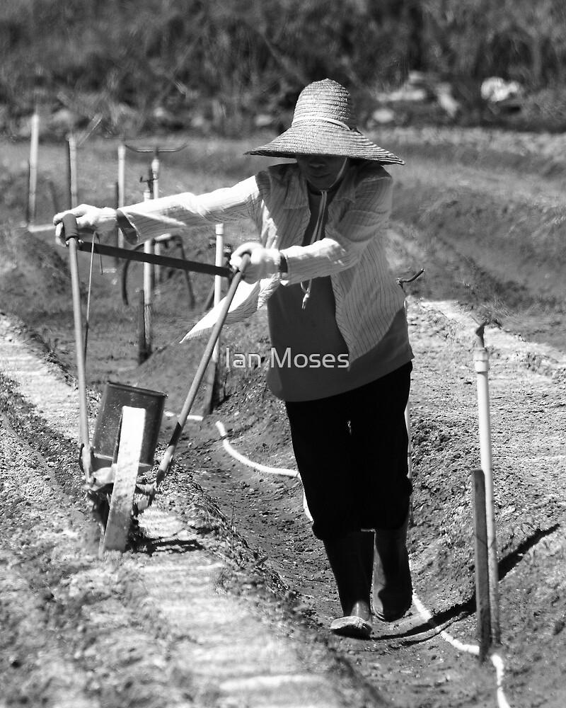 Market Gardener Lady by Ian Moses