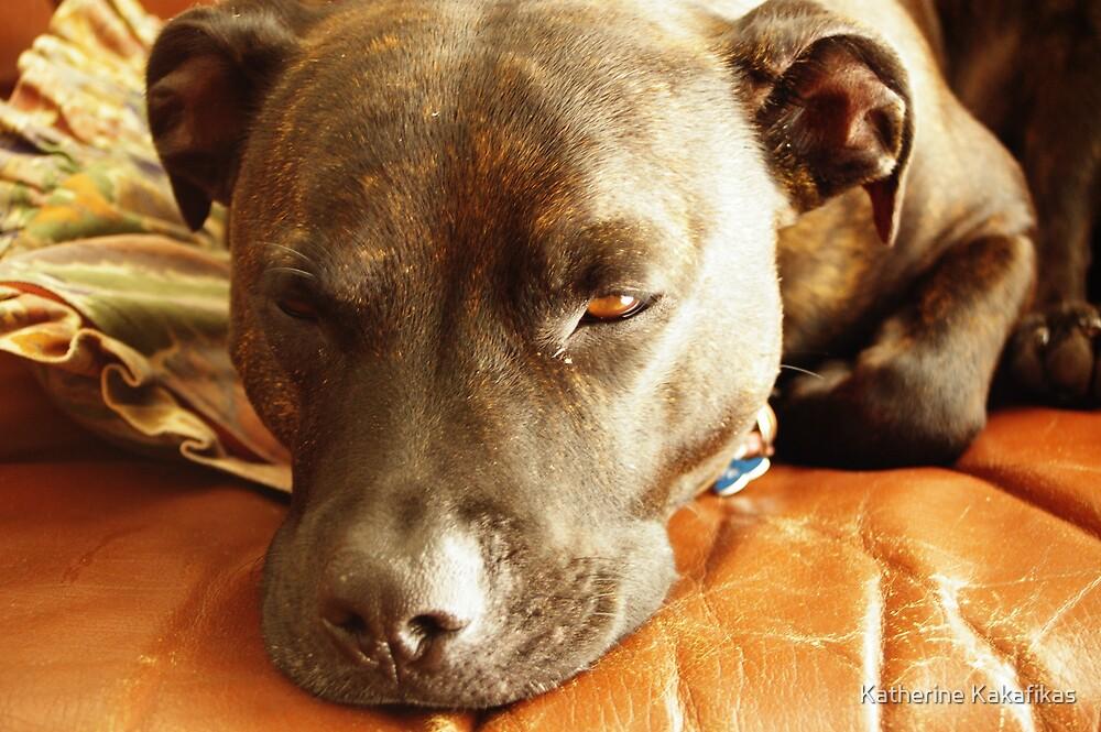 Sleepy dog by Katherine Kakafikas