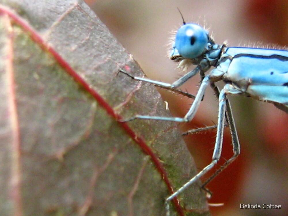 blue by Belinda Cottee
