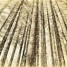 Sugarpine Walk Etchings - Laurel Hill NSW by Philip Johnson