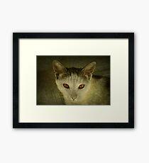feline Framed Print