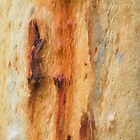 The Tree Bark Collection # 15 - Mount Wilson NSW by Philip Johnson